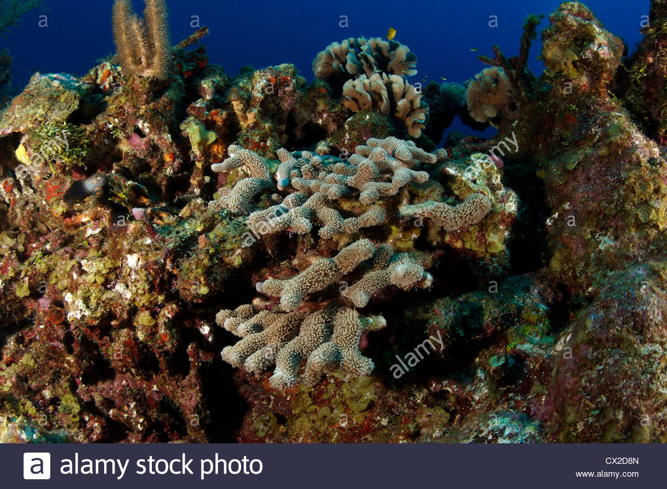 Tube Sponges Stock Photos & Tube Sponges Stock Images - Page 2 - Alamy