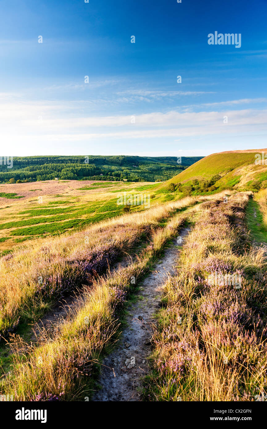 Heather lines the moor and the track down the valley to Skelton Tower near Levisham - Stock Image