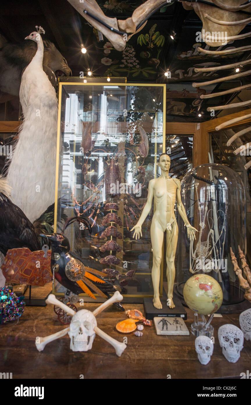 The Evolution Store in Spring Street Soho sells Skulls, Skeletons , New York, USA, - Stock Image