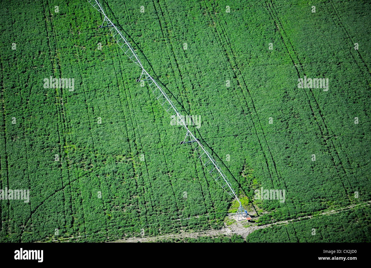 URUGUAY Bella Unión Monsanto GMO soya bean field with irrigation system, the soya is exported to China as fodder - Stock Image