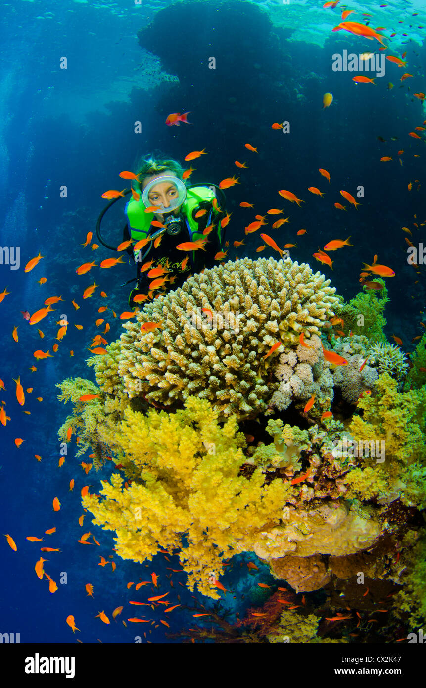 Red Sea, underwater, coral reef, sea life, marine life, ocean, scuba diving, vacation, water, diver, female diver, - Stock Image