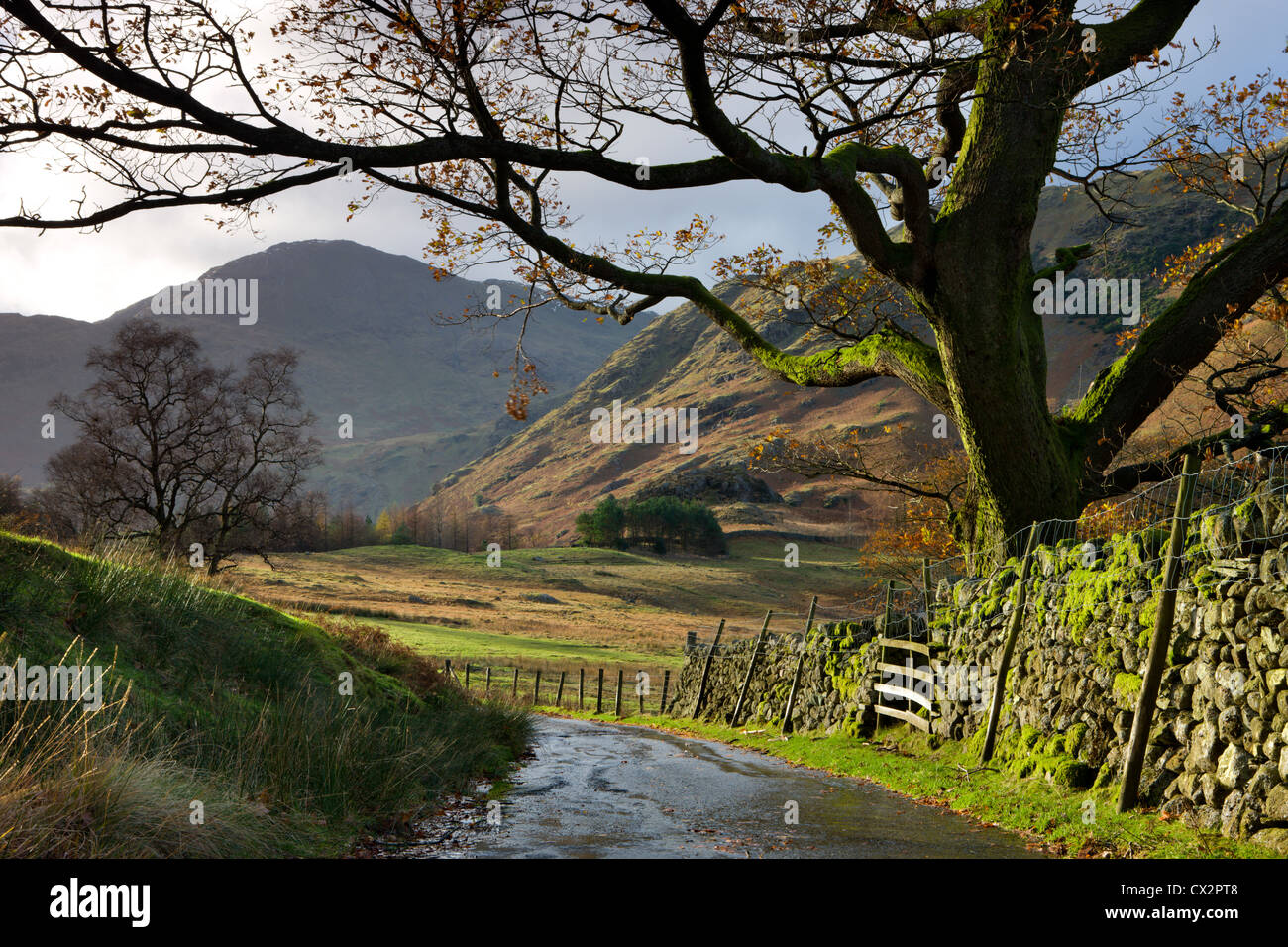 Country lane leading towards Blea Tarn in the Langdale Valley, Lake District National Park, Cumbria, England. - Stock Image