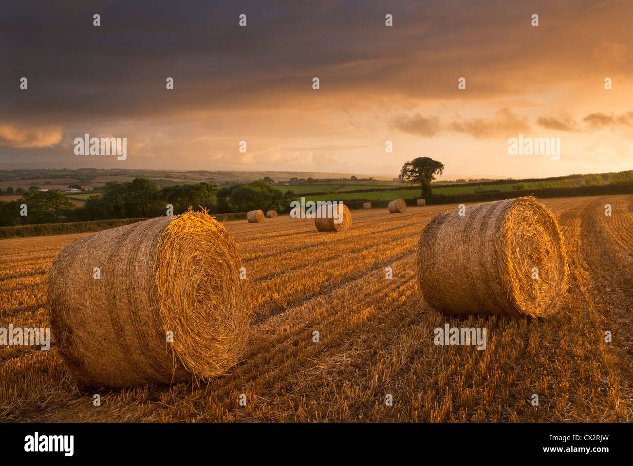 Hay Bales in a harvested field at sunset, Eastington, Devon, England. Summer (August) 2012. - Stock Image