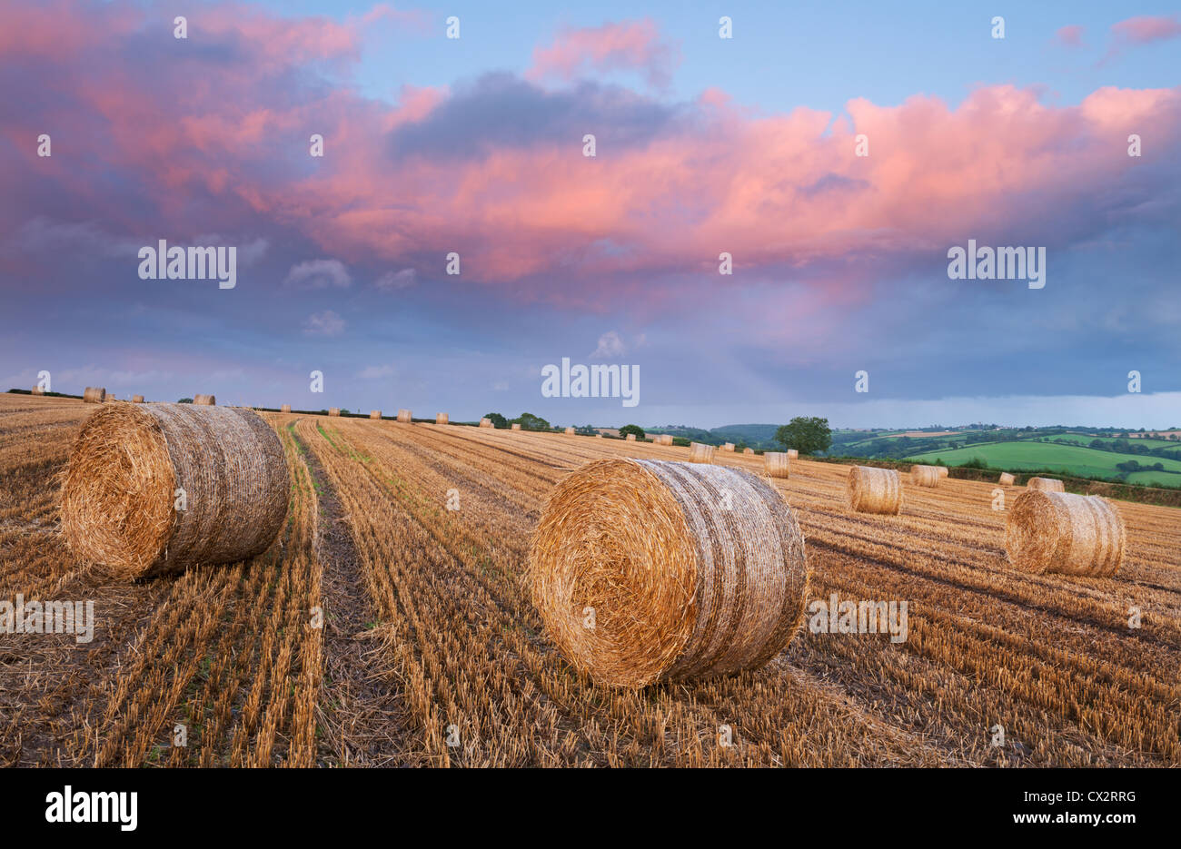 Straw Bales in a field beneath a pink sunset sky, Eastington, Devon, England. Summer (August) 2012. - Stock Image