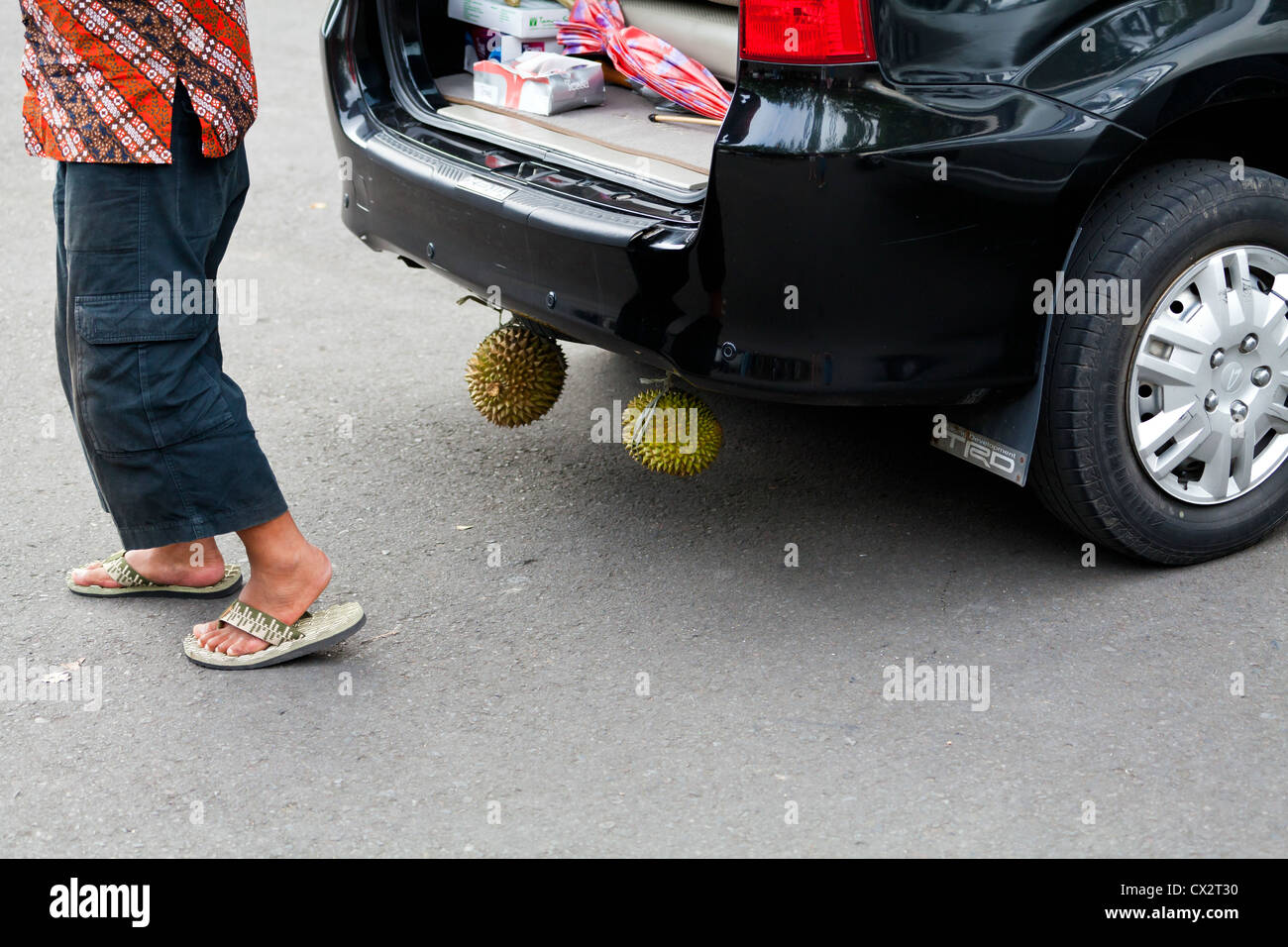 durians-hanging-under-a-car-on-bali-CX2T