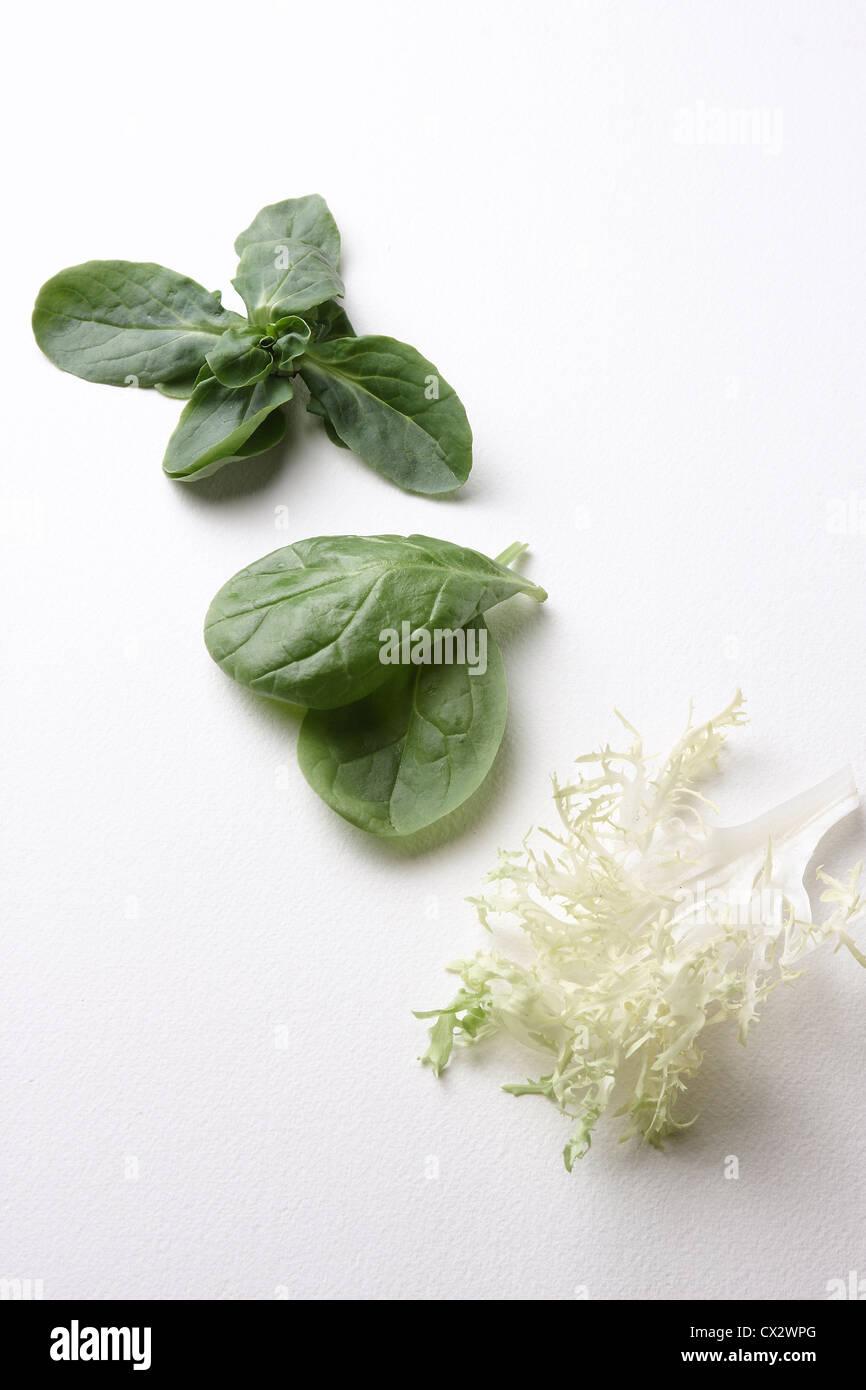 Leafy Greens - Stock Image