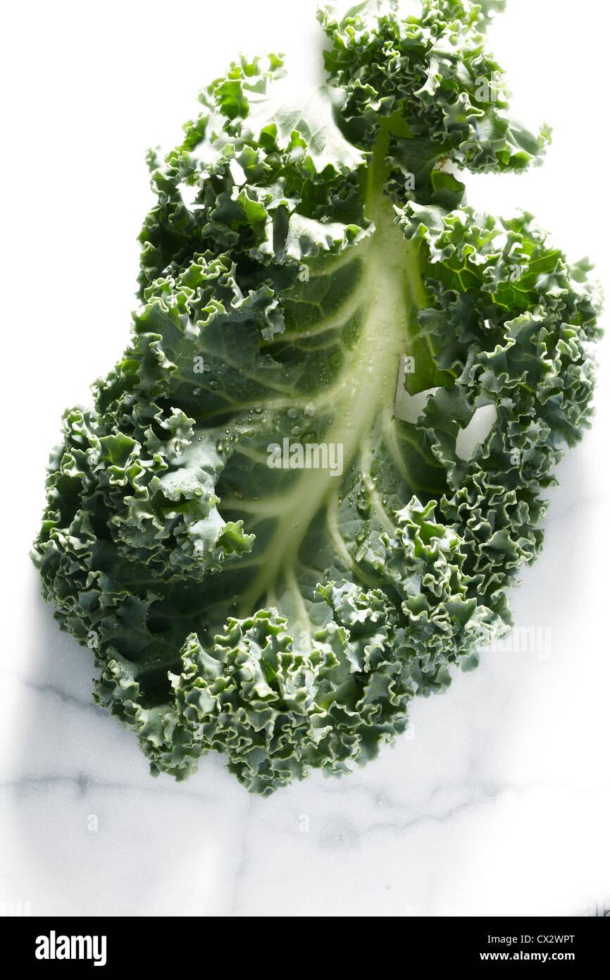 Kale - Stock Image