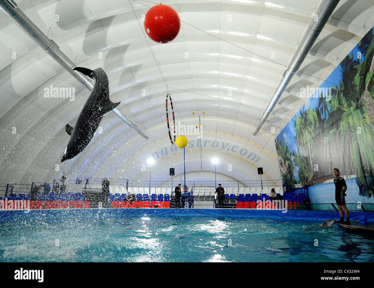 ITAR-TASS: MOSCOW, RUSSIA. DECEMBER 8, 2011. A dolphin with a ball performs in a newly opened Dolphinarium on the - Stock Image