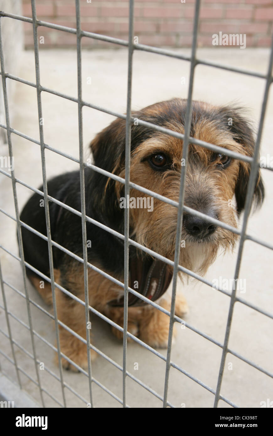 Sad Dog Cage High Resolution Stock Photography And Images Alamy