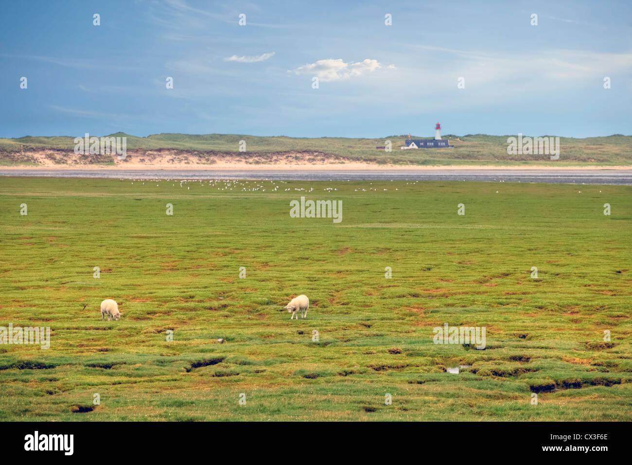 Koenig harbor, elbows, Wadden Sea, mudflats, Sylt, Schleswig-Holstein, Germany - Stock Image
