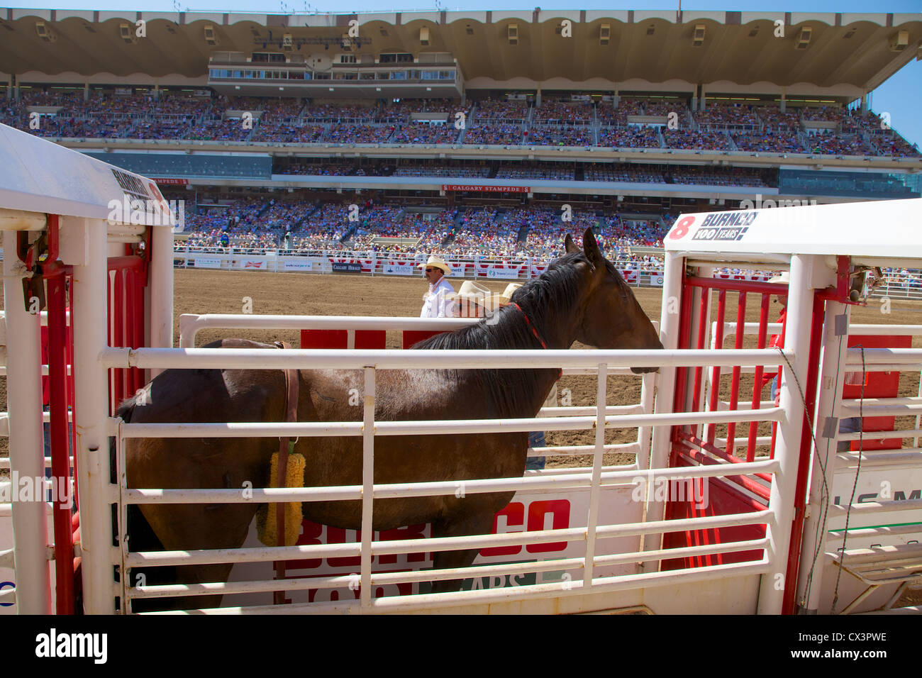 A rodeo horse awaits its turn in the sidelines at Calgary Stampede, Alberta, Canada - Stock Image