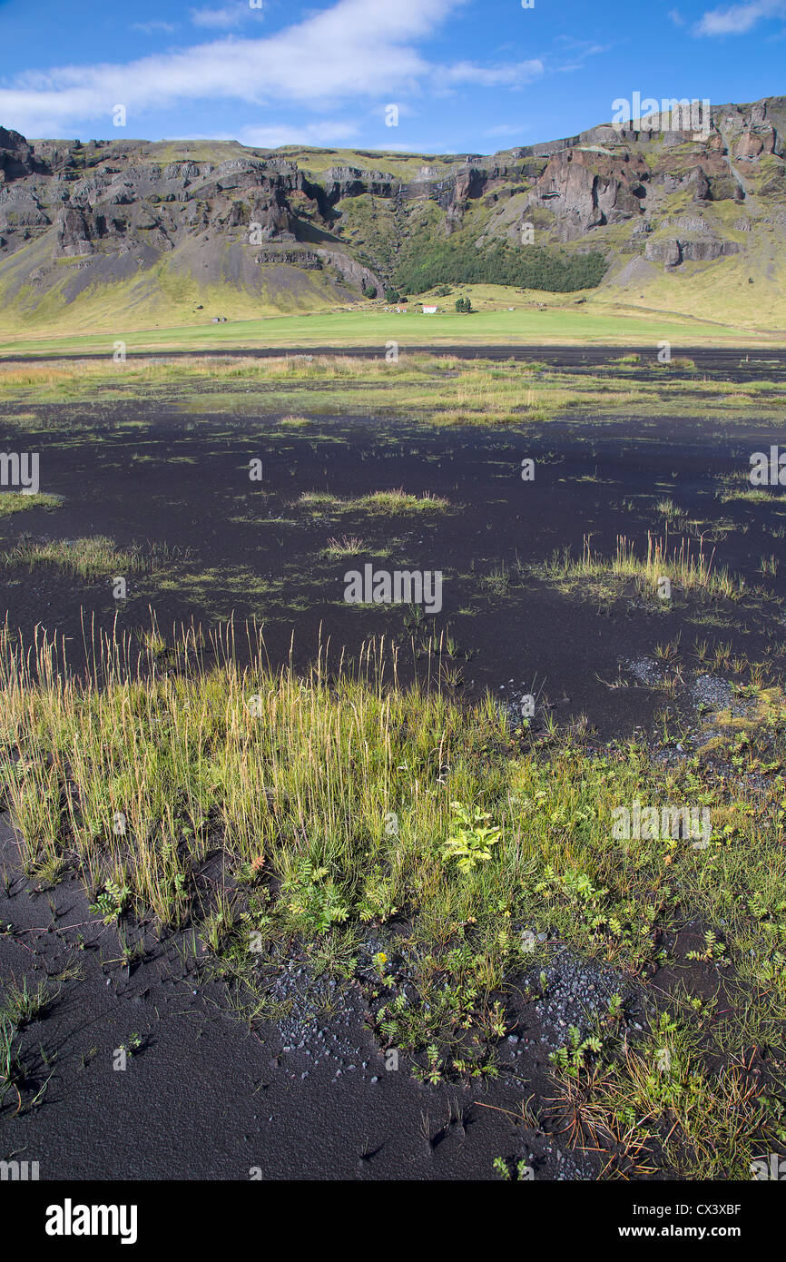 Black volcanic soil with sparse vegetation, south Iceland - Stock Image