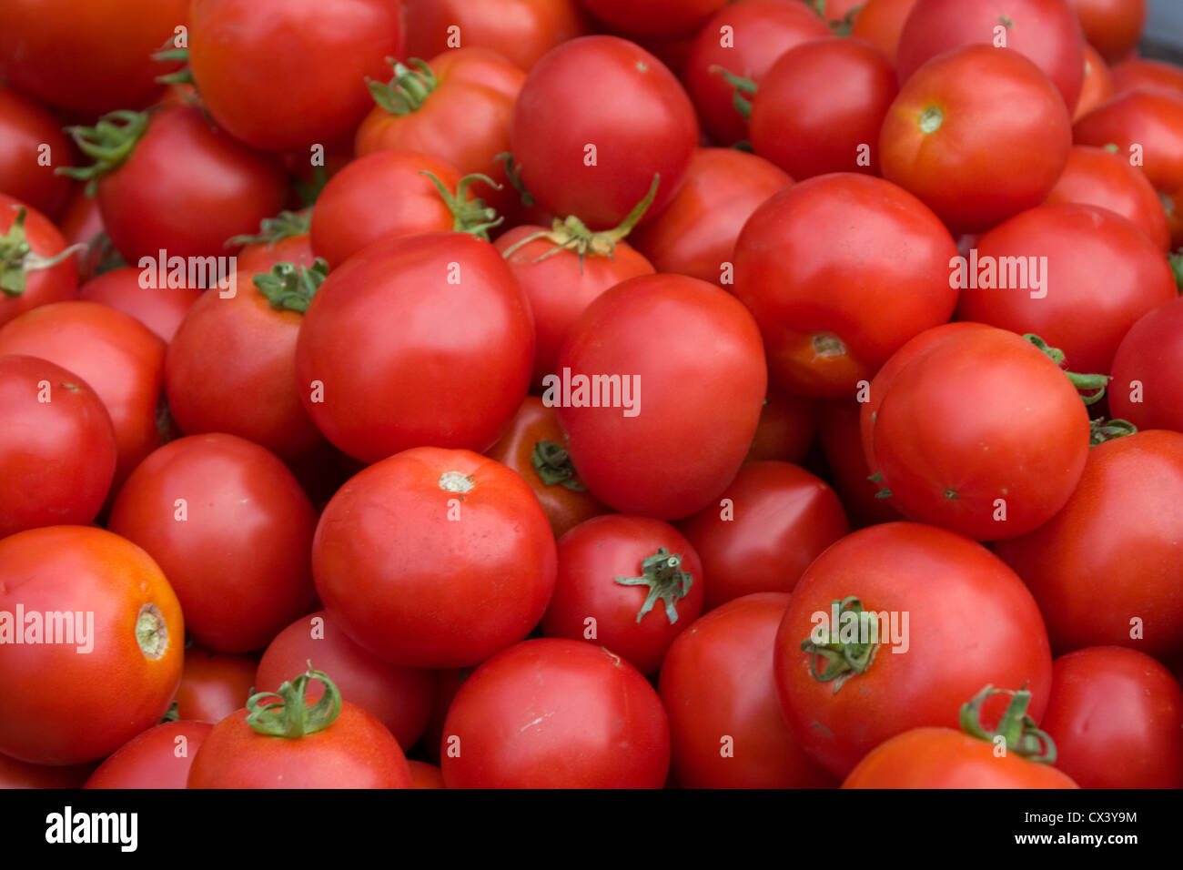 Fresh locally grown tomatoes available at the Monterey Farmers Market. Stock Photo