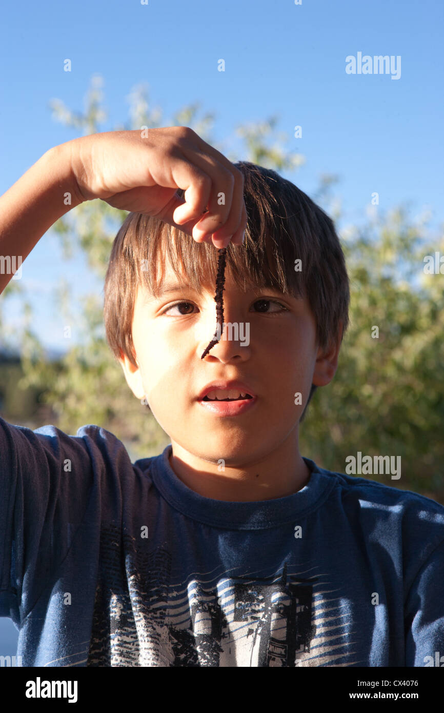 Twelve year old boy holding a large worm outdoors. - Stock Image