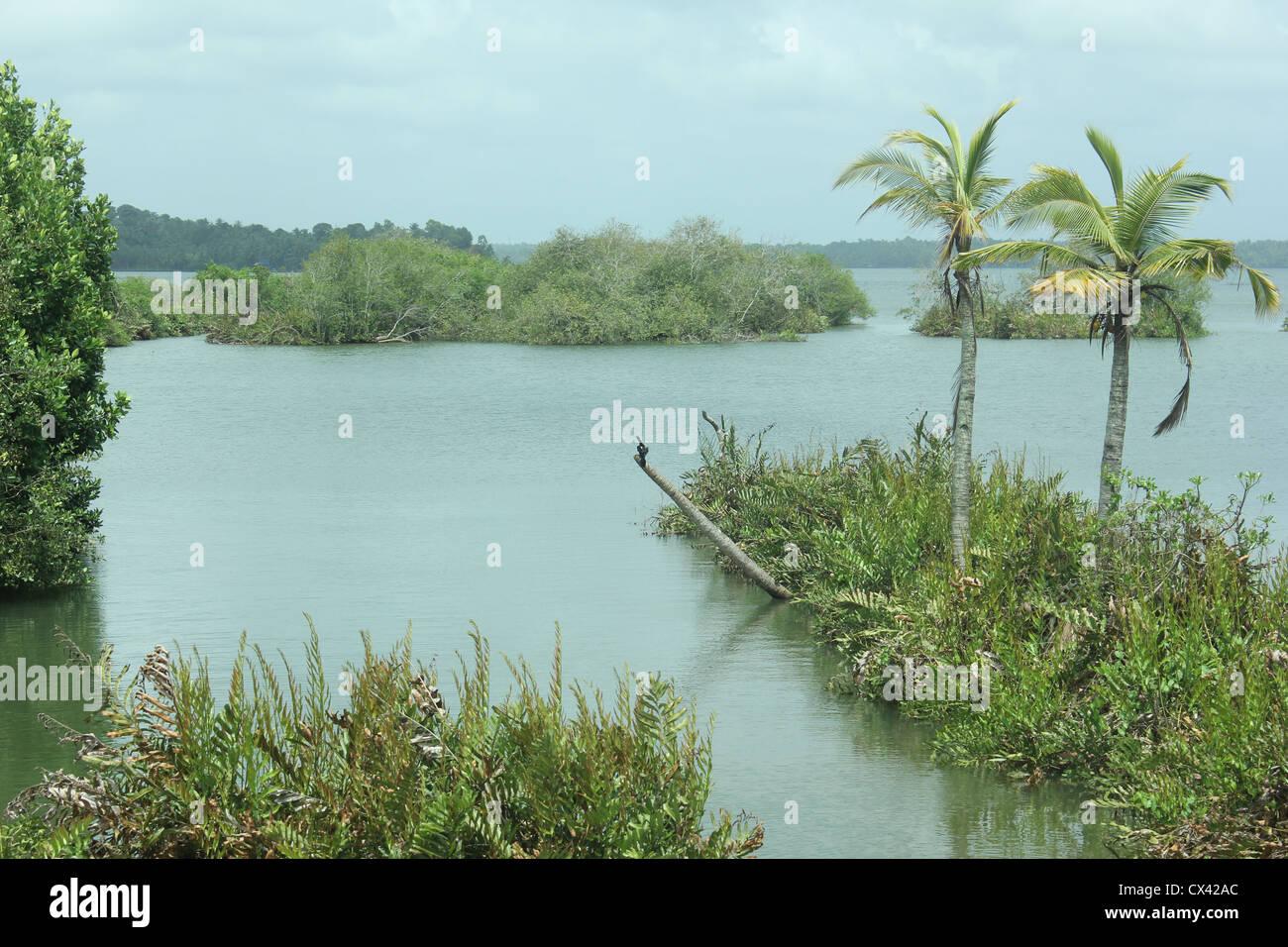 View of Astamudi Lake, Kollam, Kerala, India South India, mangrove - Stock Image