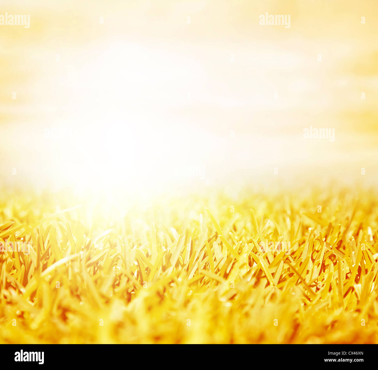 Picture of beautiful golden wheat field with bright sun shine, abstract autumn natural background, agriculture landscape - Stock Image