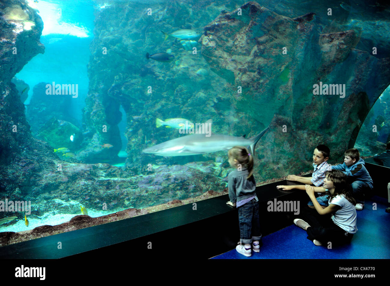 Shark tank at Oceanopolis,sea world,Brest,Finistere,Bretagne,Brittany,France - Stock Image
