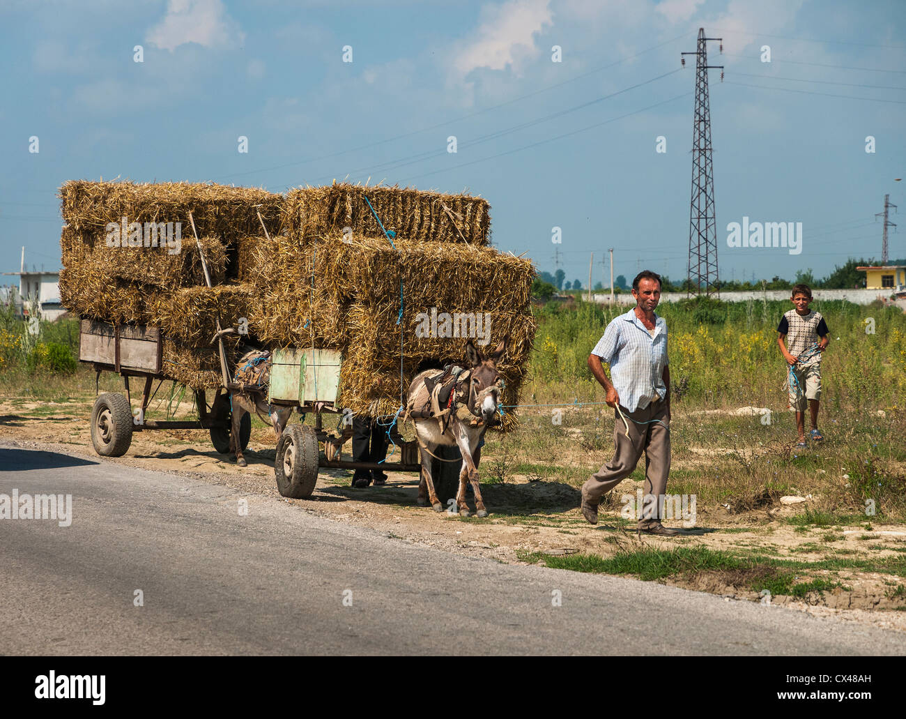 Transporting harvested hay using carts pulled by mules near Berat in central Albania. - Stock Image