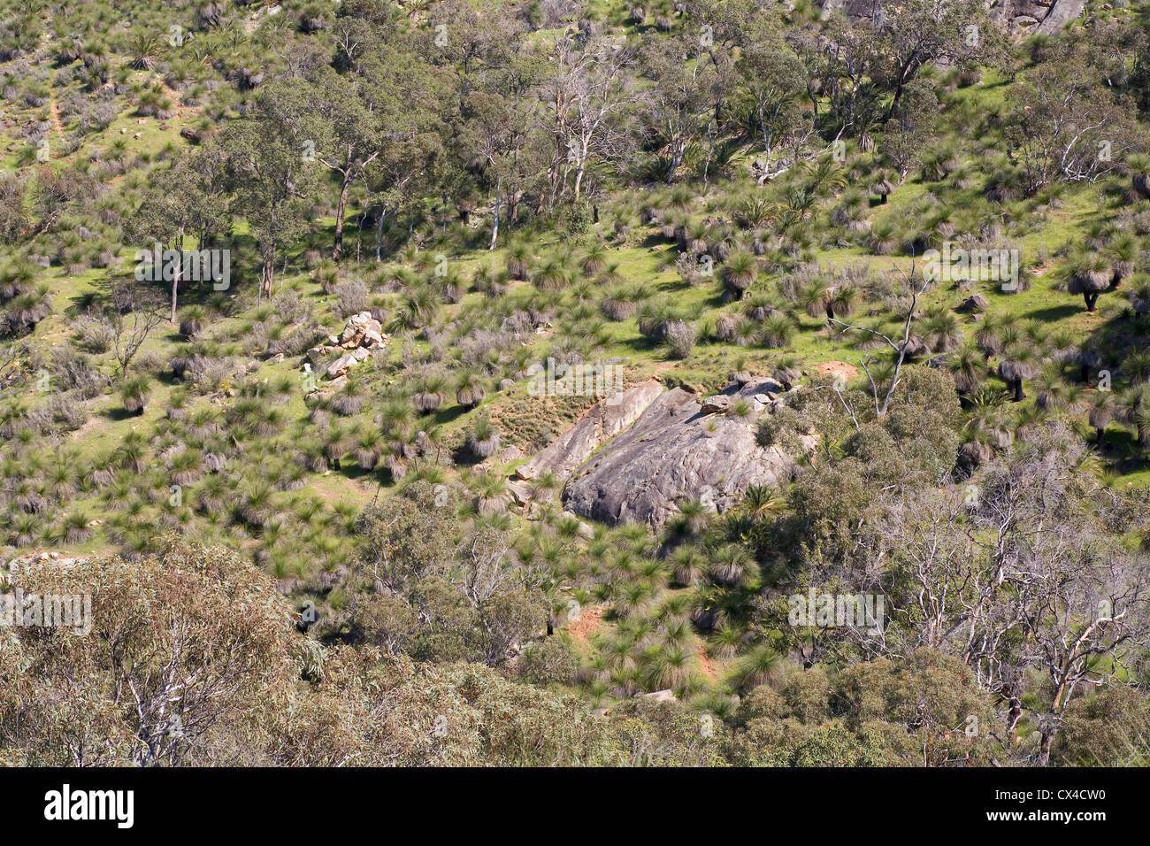A rocky hillside in the Australian bush. - Stock Image