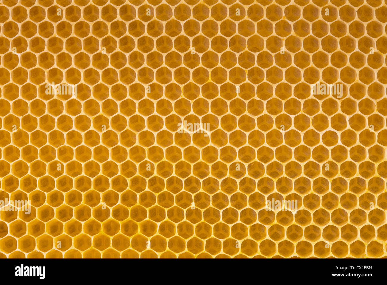 bee honey in honeycomb - Stock Image