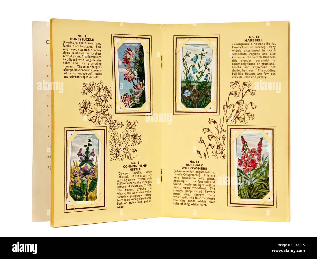 Vintage 'Wild Flowers' Ty-Phoo Tea Ltd picture card album - Stock Image