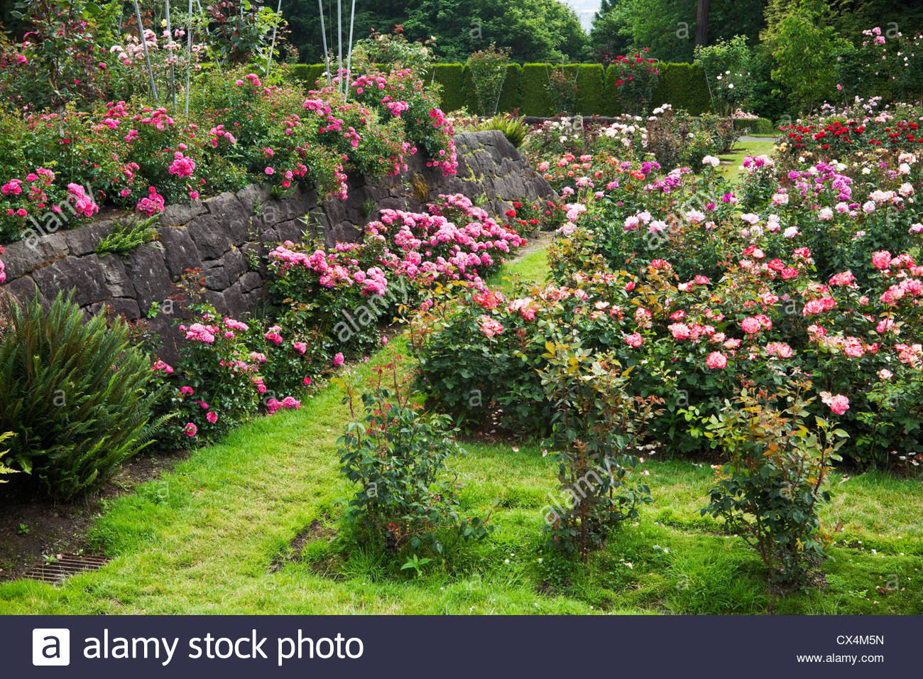 International rose test garden portland oregon stock photo 50505441 alamy for Portland international rose test garden