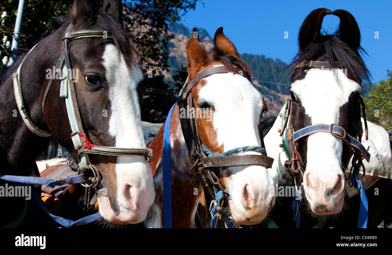 Three horses - Stock Image