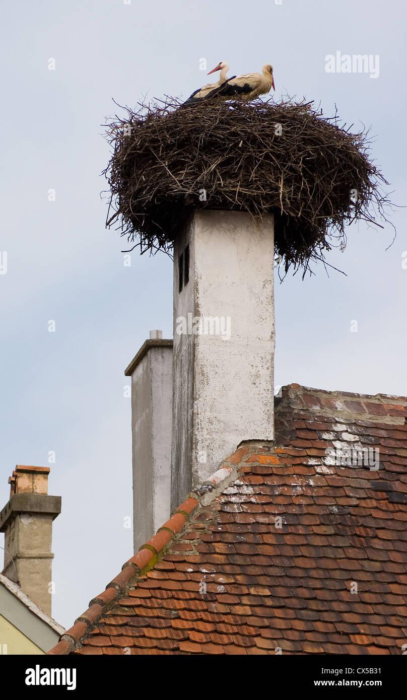 Elk190-2600v Hungary, Koszeg, storks on nest on top of chimney - Stock Image