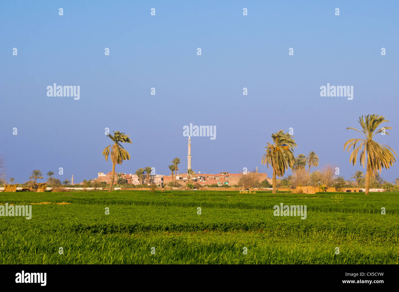 Fields Minya Upper Egypt - Stock Image