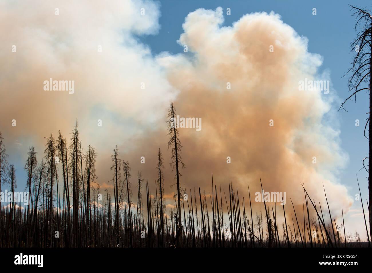 Yellowstone Fire Summer 2011 - Stock Image