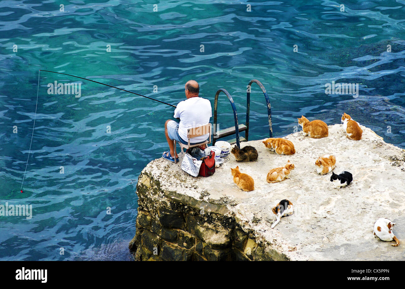 Fisherman and cats.Valletta,Malta. - Stock Image