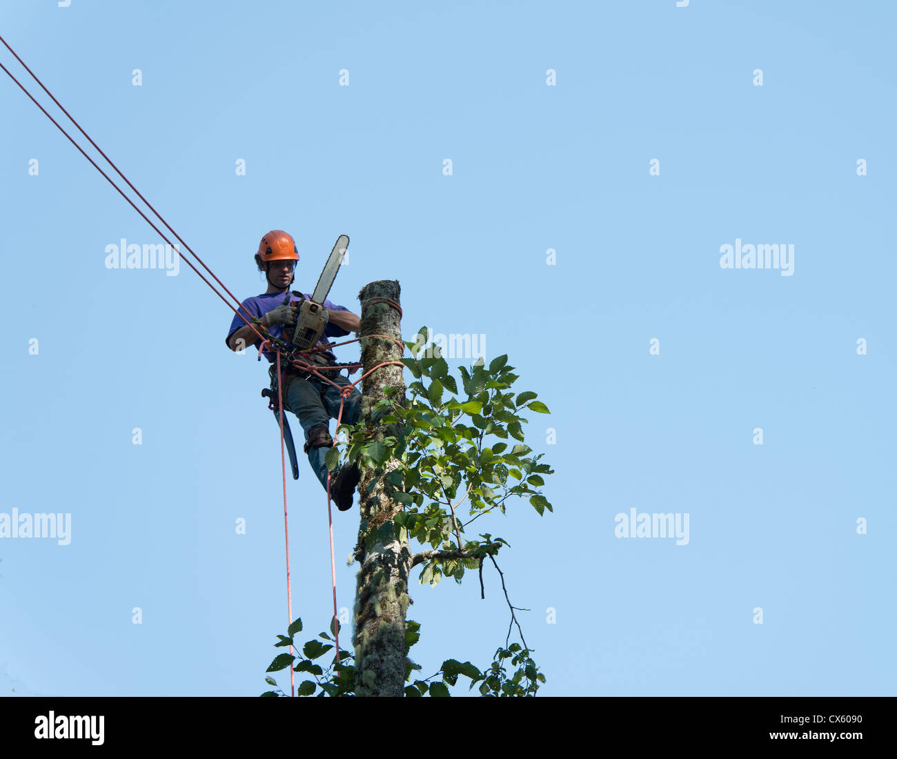 A tree trimmer adjusts his chainsaw after topping a dying tree in a residental area. - Stock Image