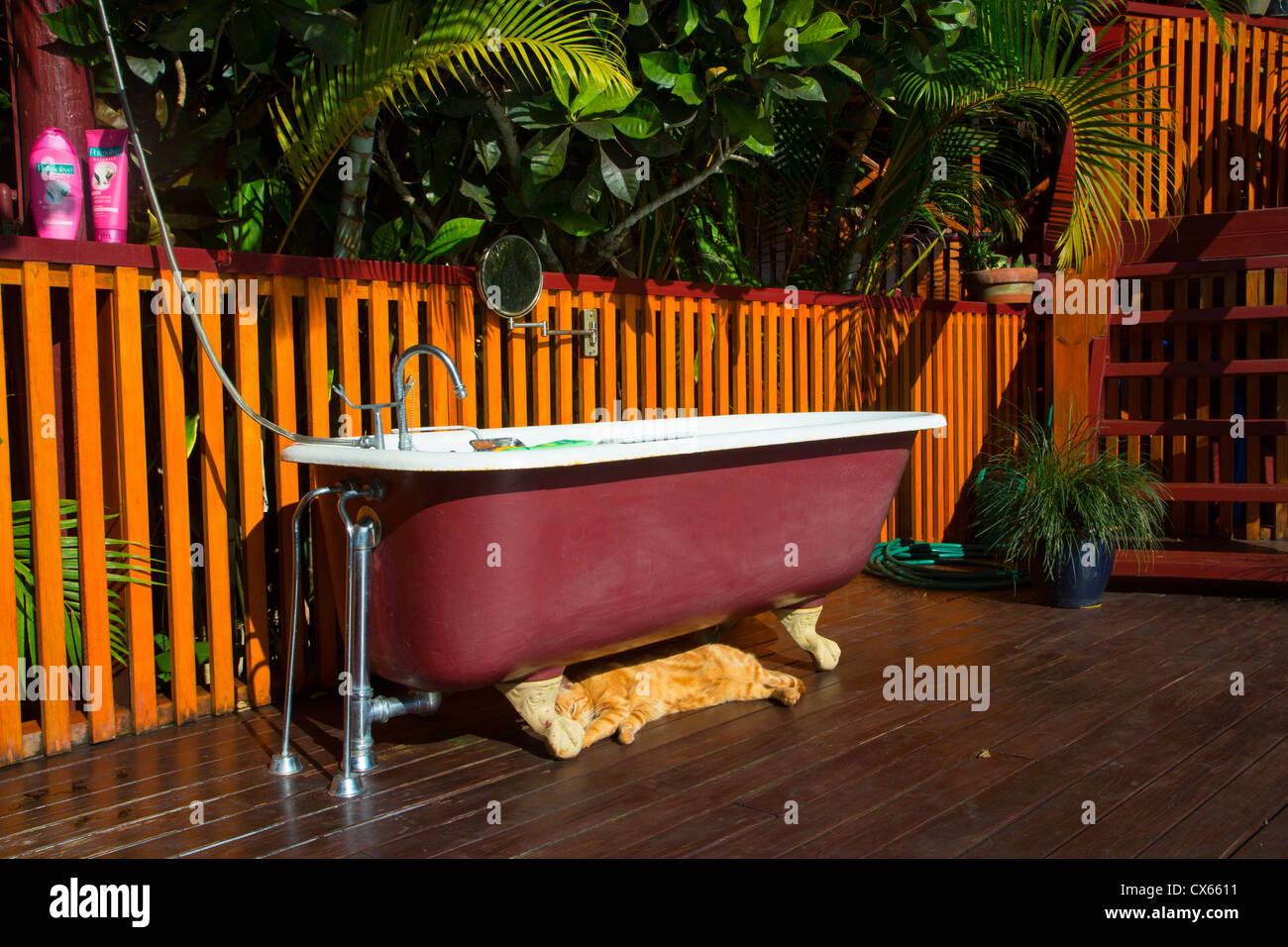 Claw footed bathtub, Fiji - Stock Image