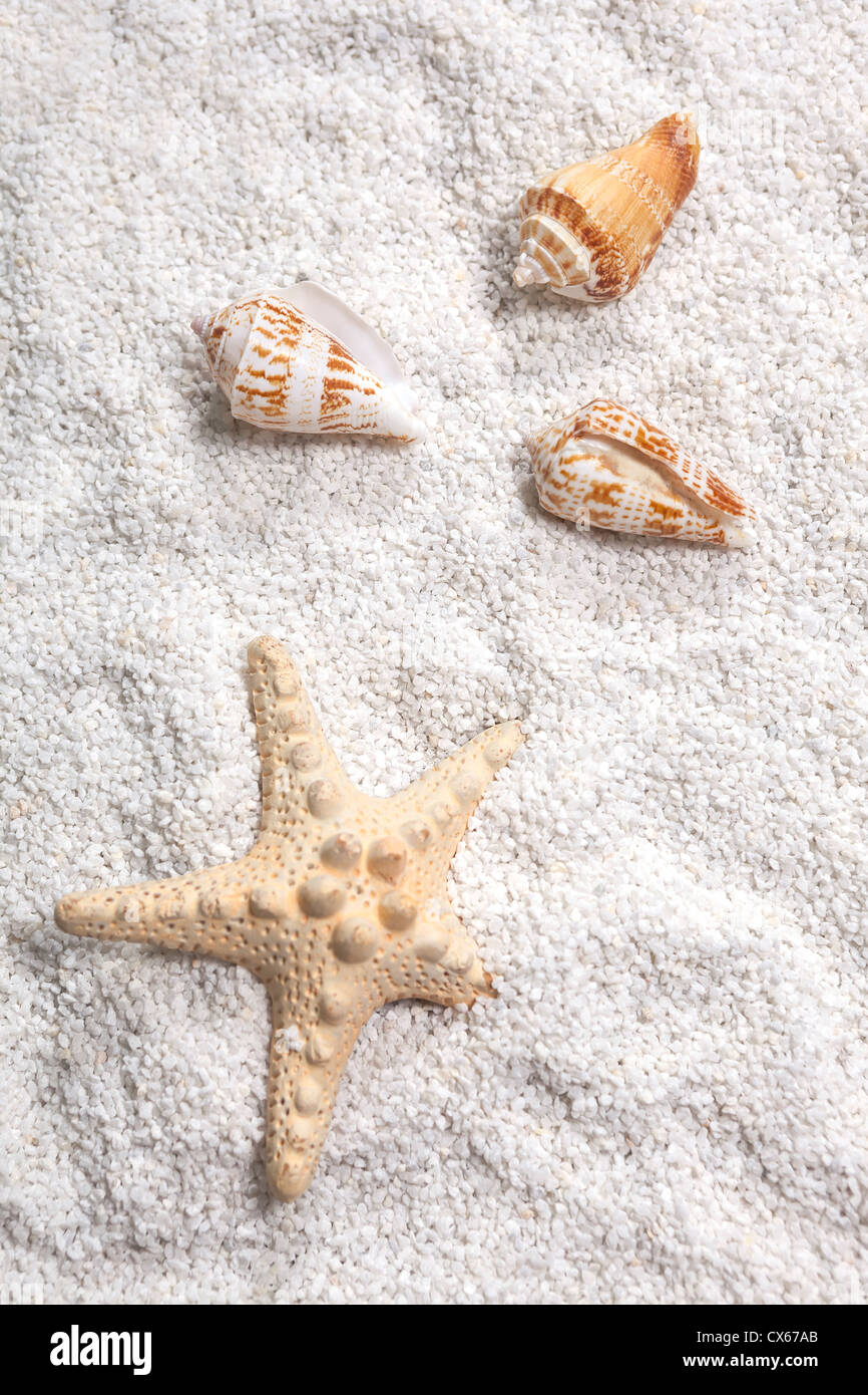 three sea shells and a starfish on white sand - Stock Image