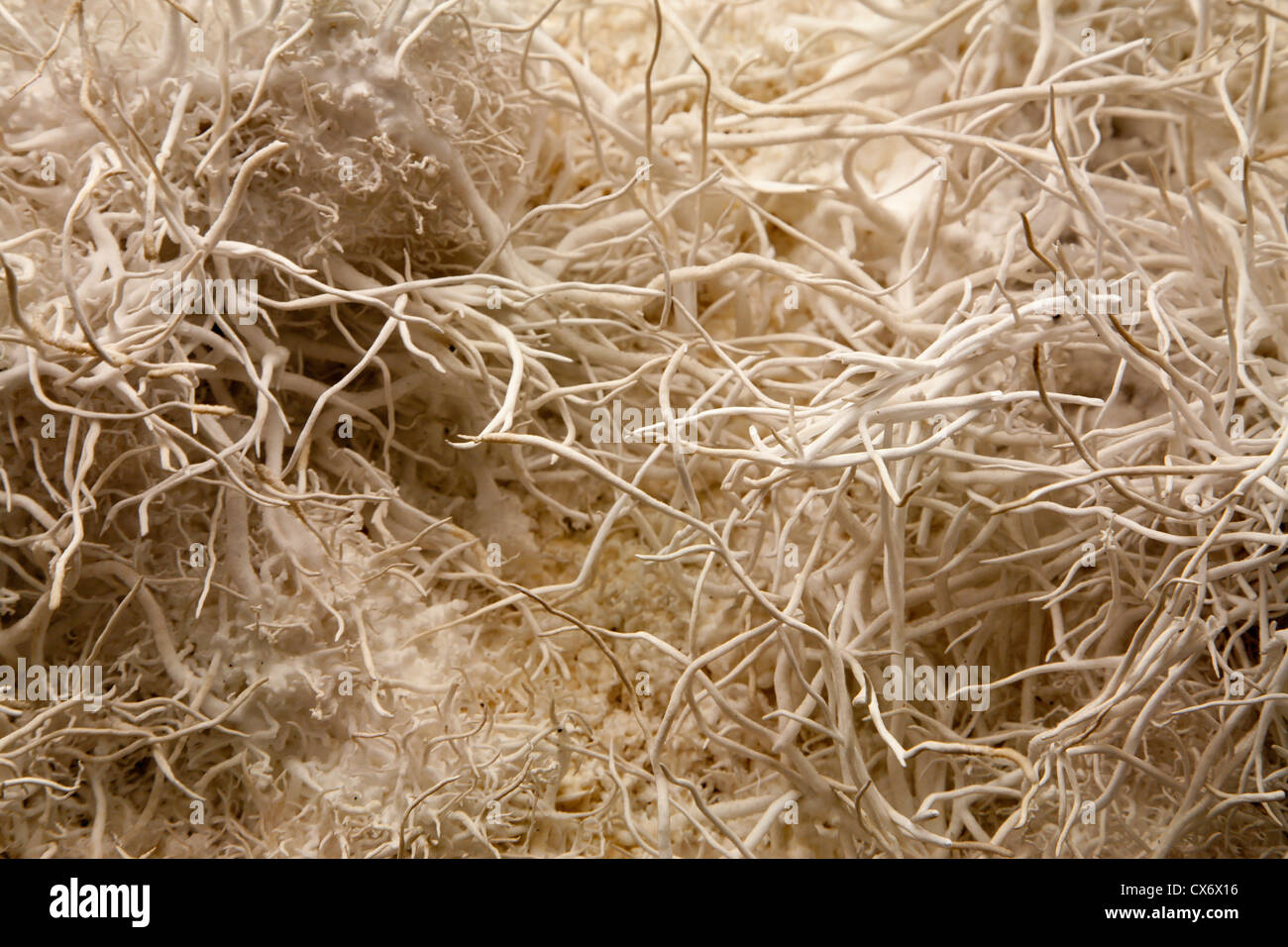 detail of aragonit structure - Stock Image