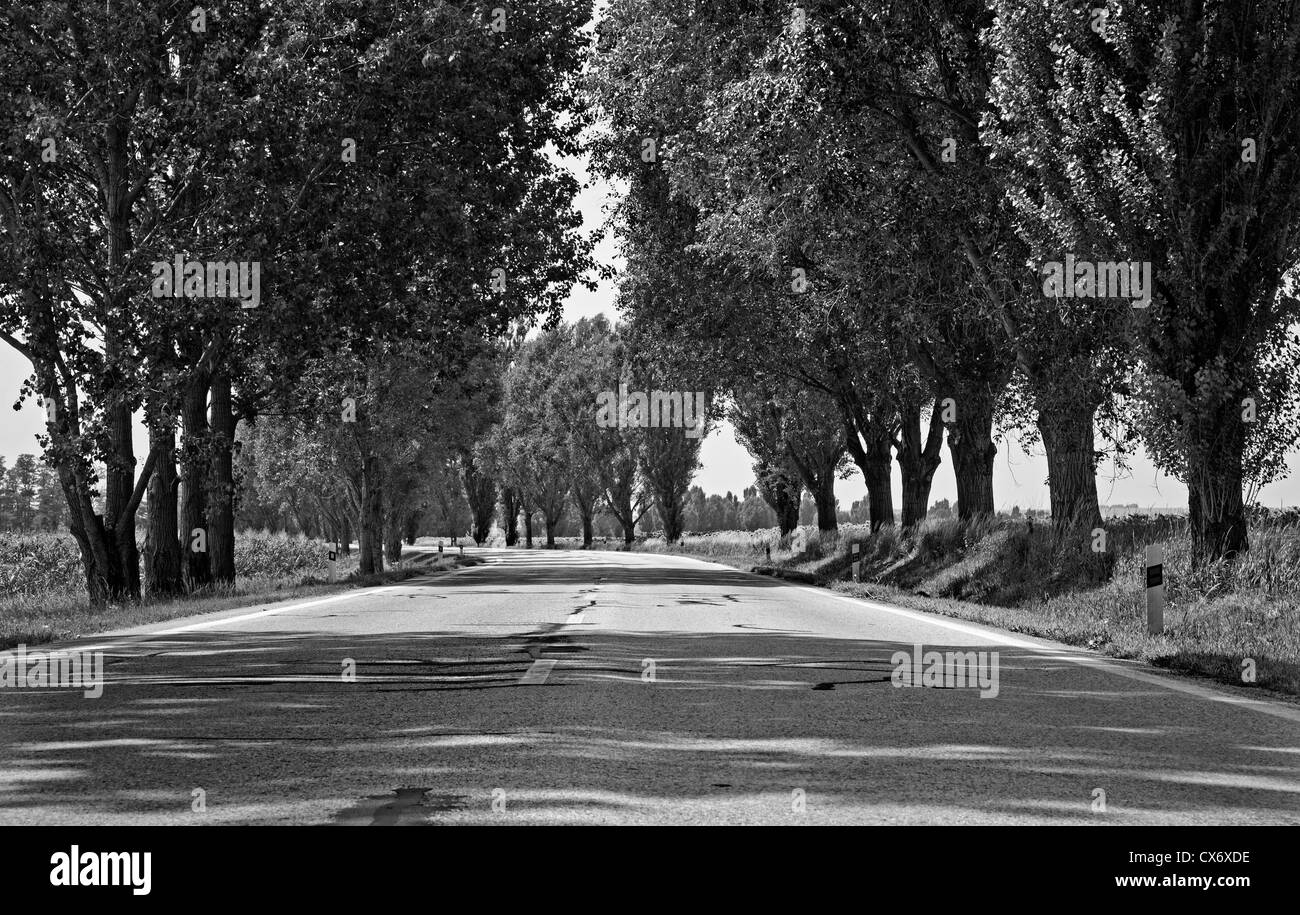 way and poplar alley - Stock Image