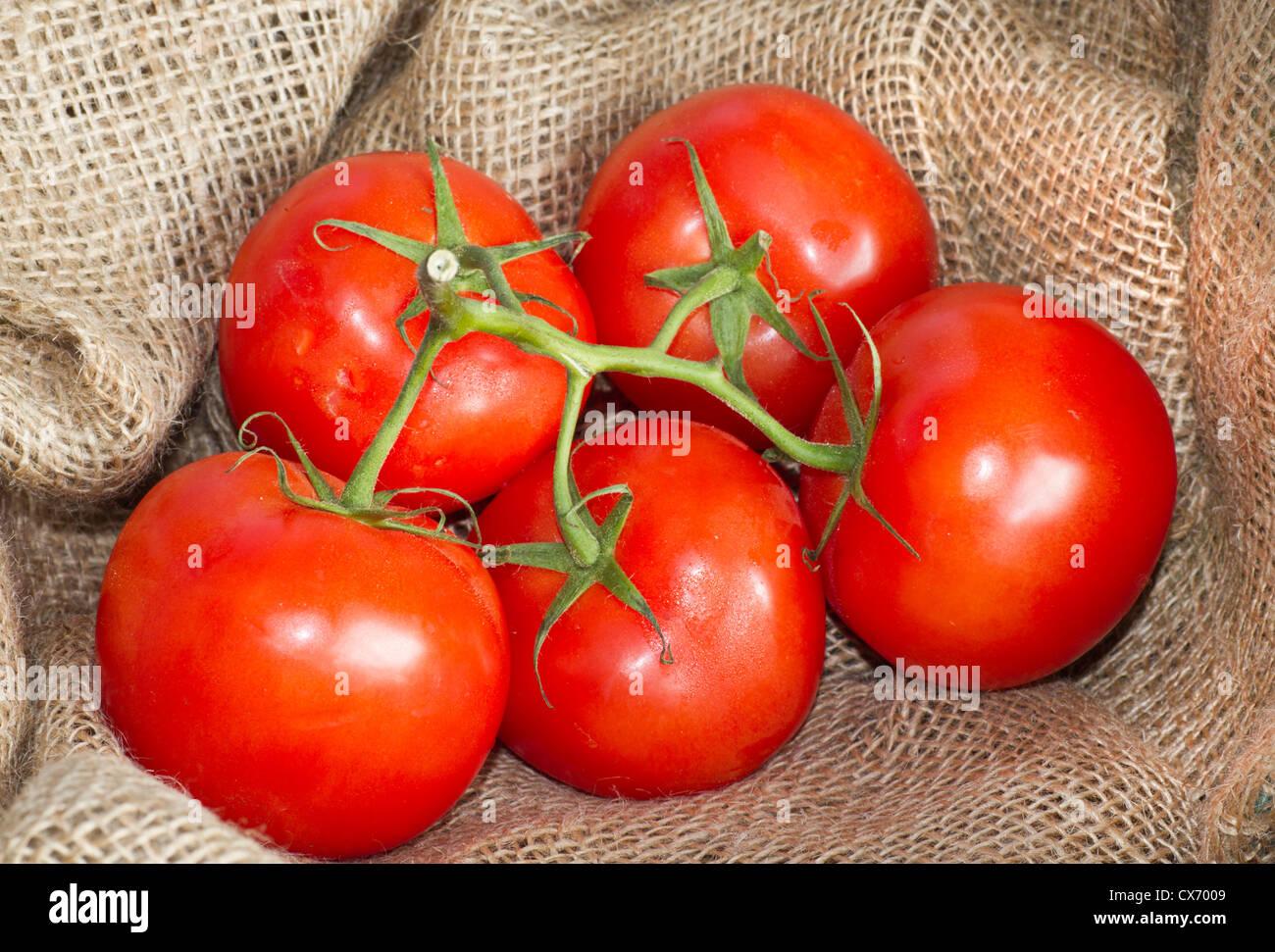 5 vine tomatoes with stalks on hessian sacking - Stock Image