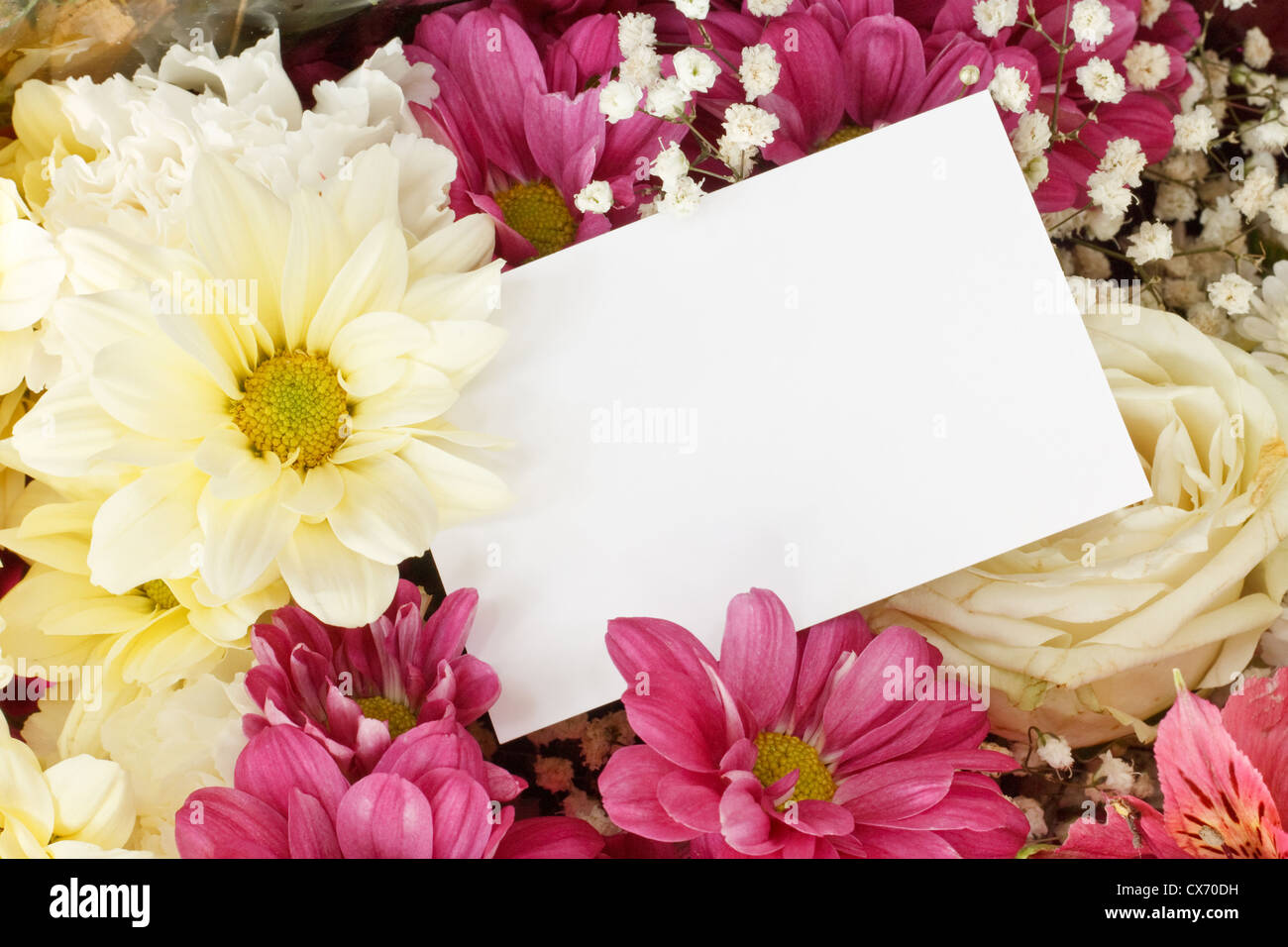 Chrysanthemum floral bouquet frame with blank greeting card to chrysanthemum floral bouquet frame with blank greeting card to insert your message or florists branding m4hsunfo