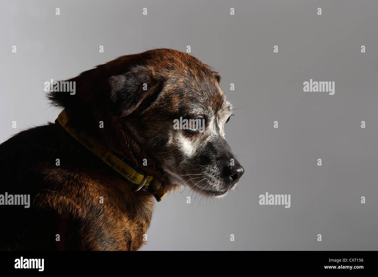 small dog - Stock Image
