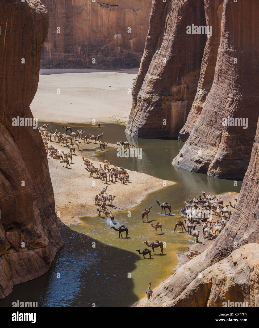 Camels at Waterhole Ennedi Mountains Chad - Stock Image
