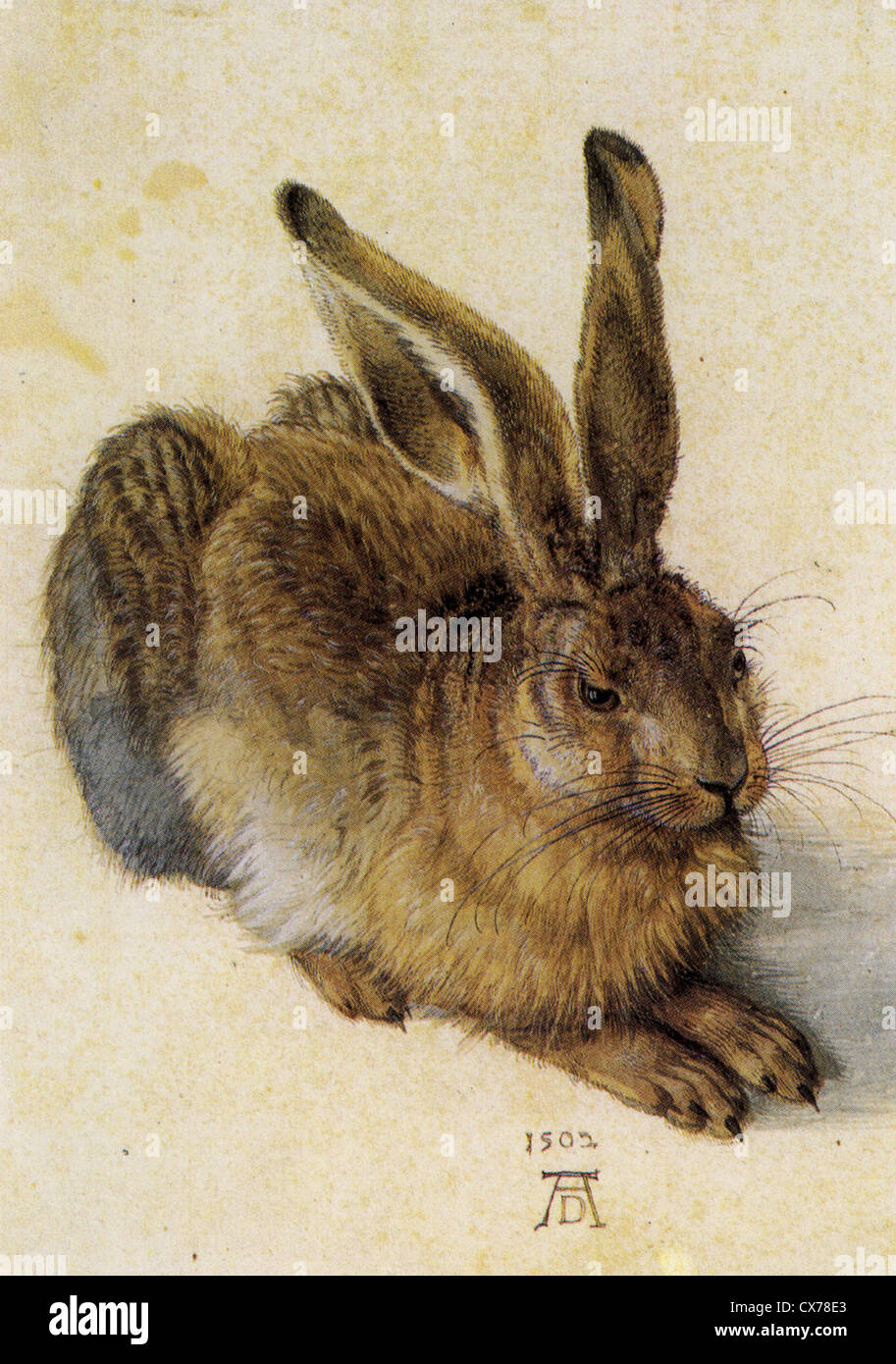 ALBRECHT DURER (1471-1528)  Watercolour of a Young Hare dated 1502 held at the Albertina museum in Vienna - Stock Image