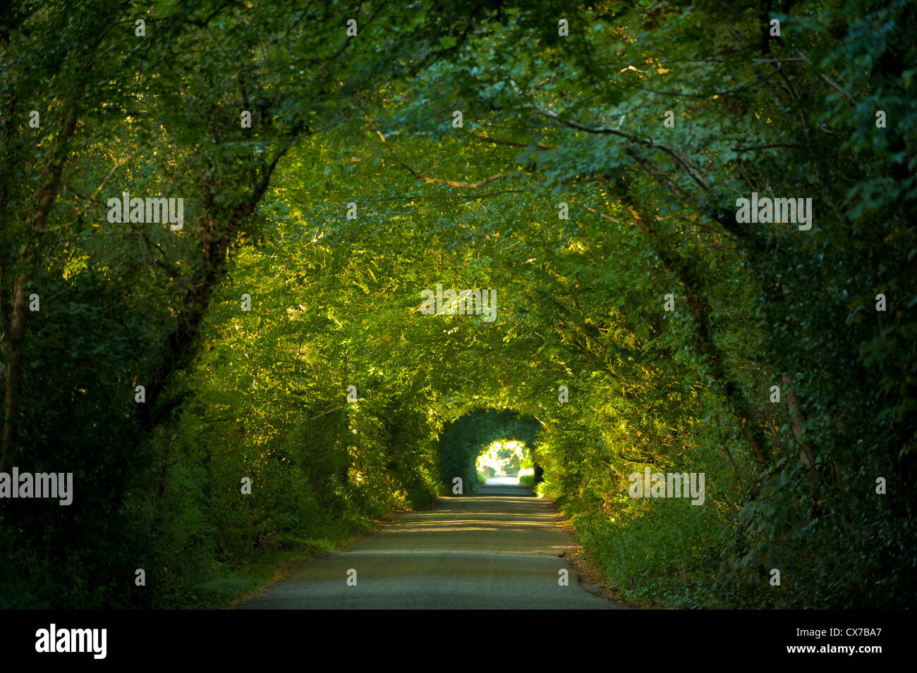 Image result for canopied roadway