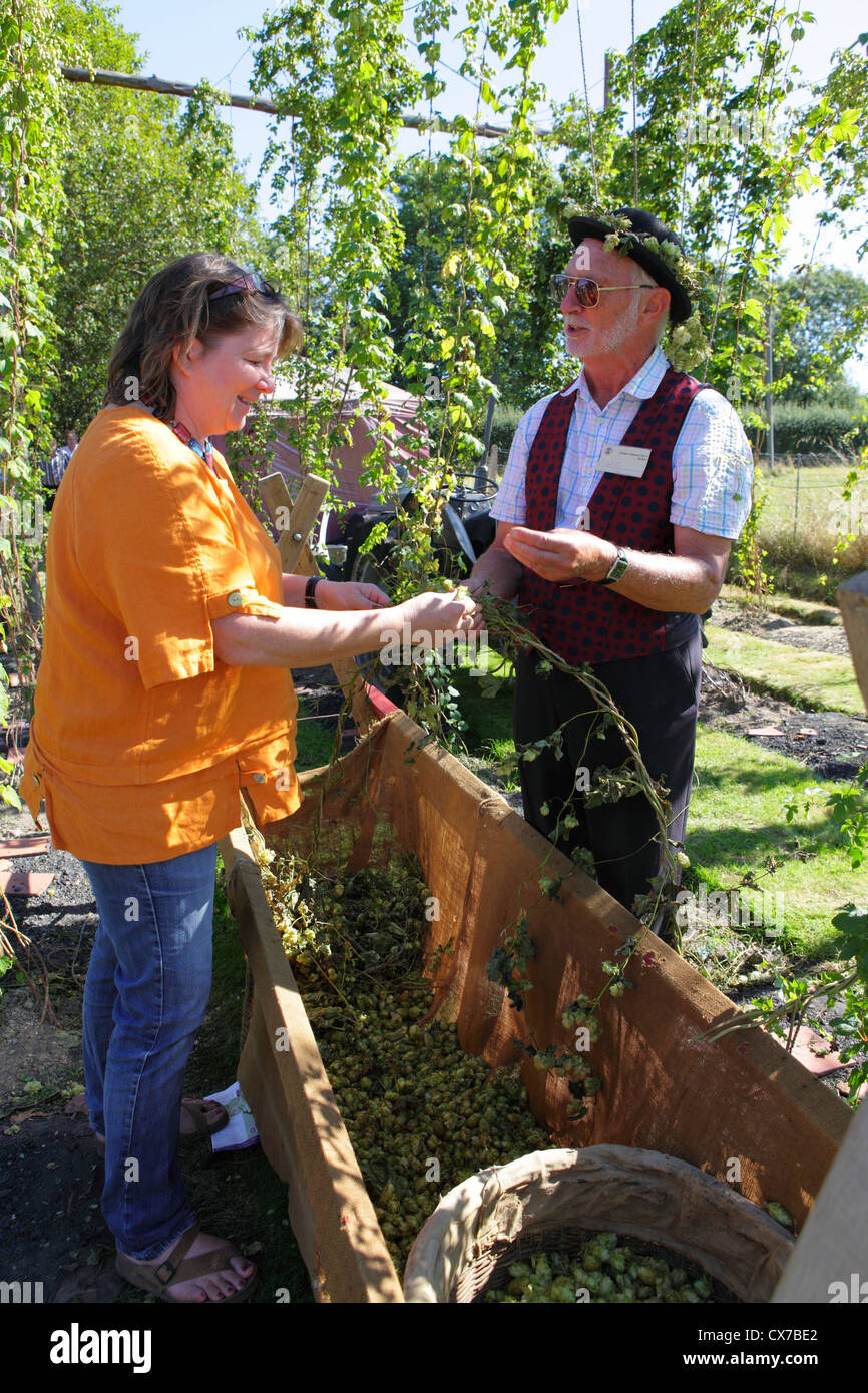 Demonstrating traditional hop picking at Bodiam East Sussex UK GB - Stock Image