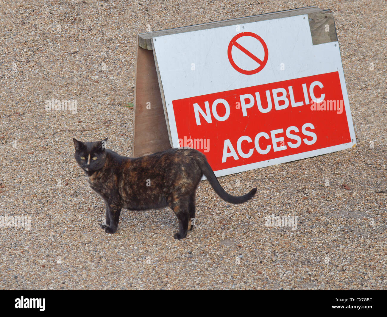 Cat and no public access sign - Stock Image