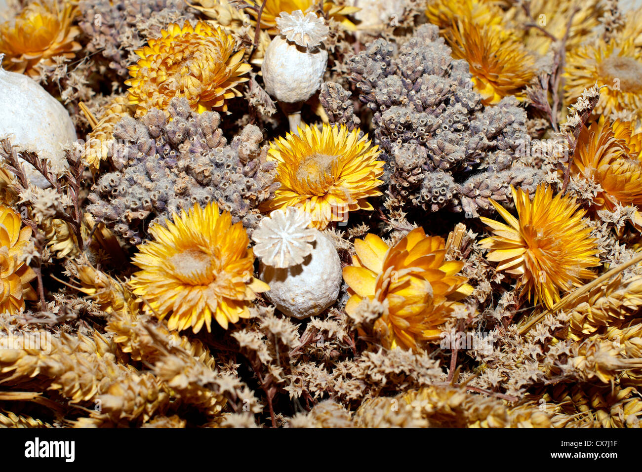 Decoration of dried flowers Stock Photo