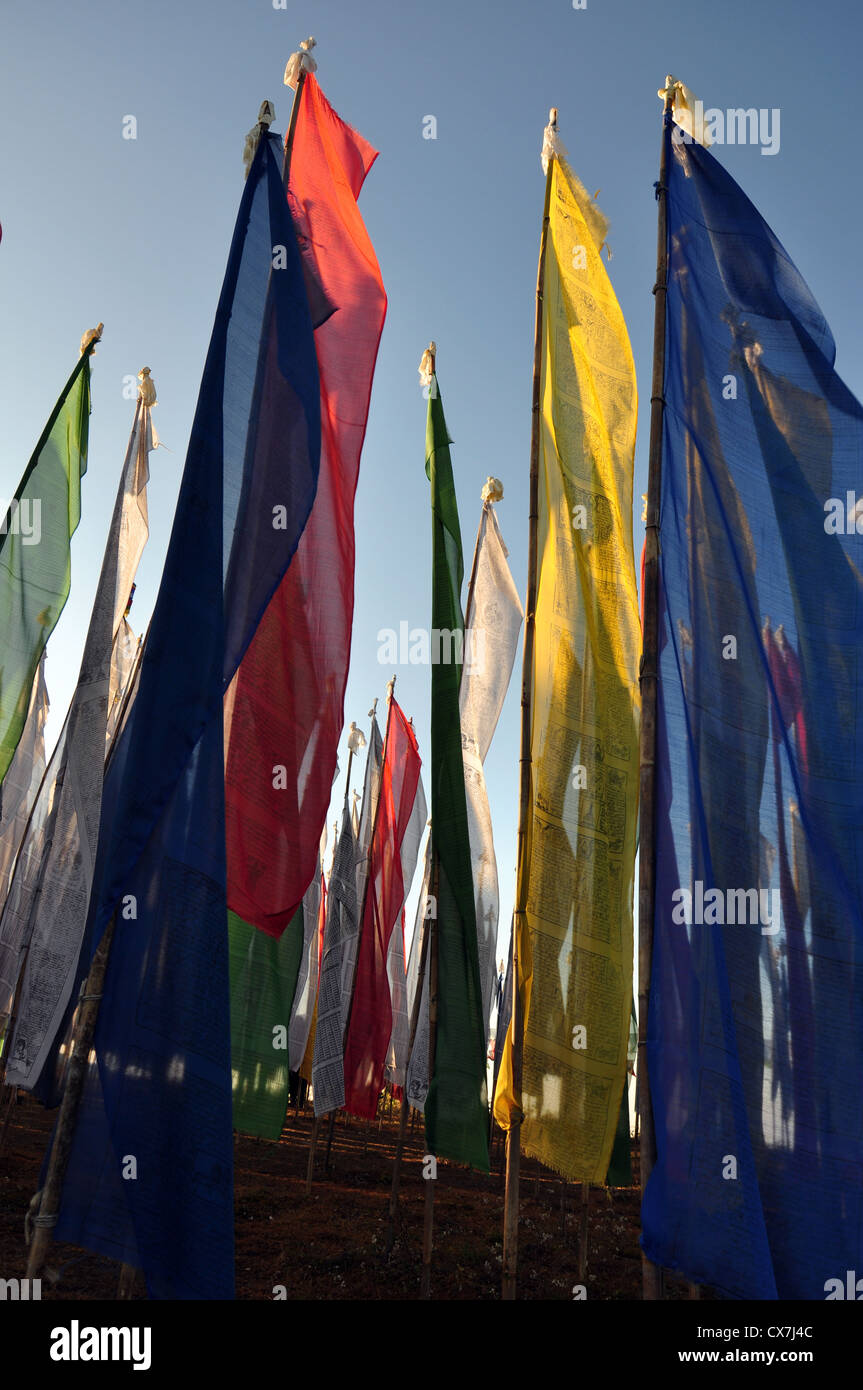 color flags stuck on the open field for festival Stock Photo