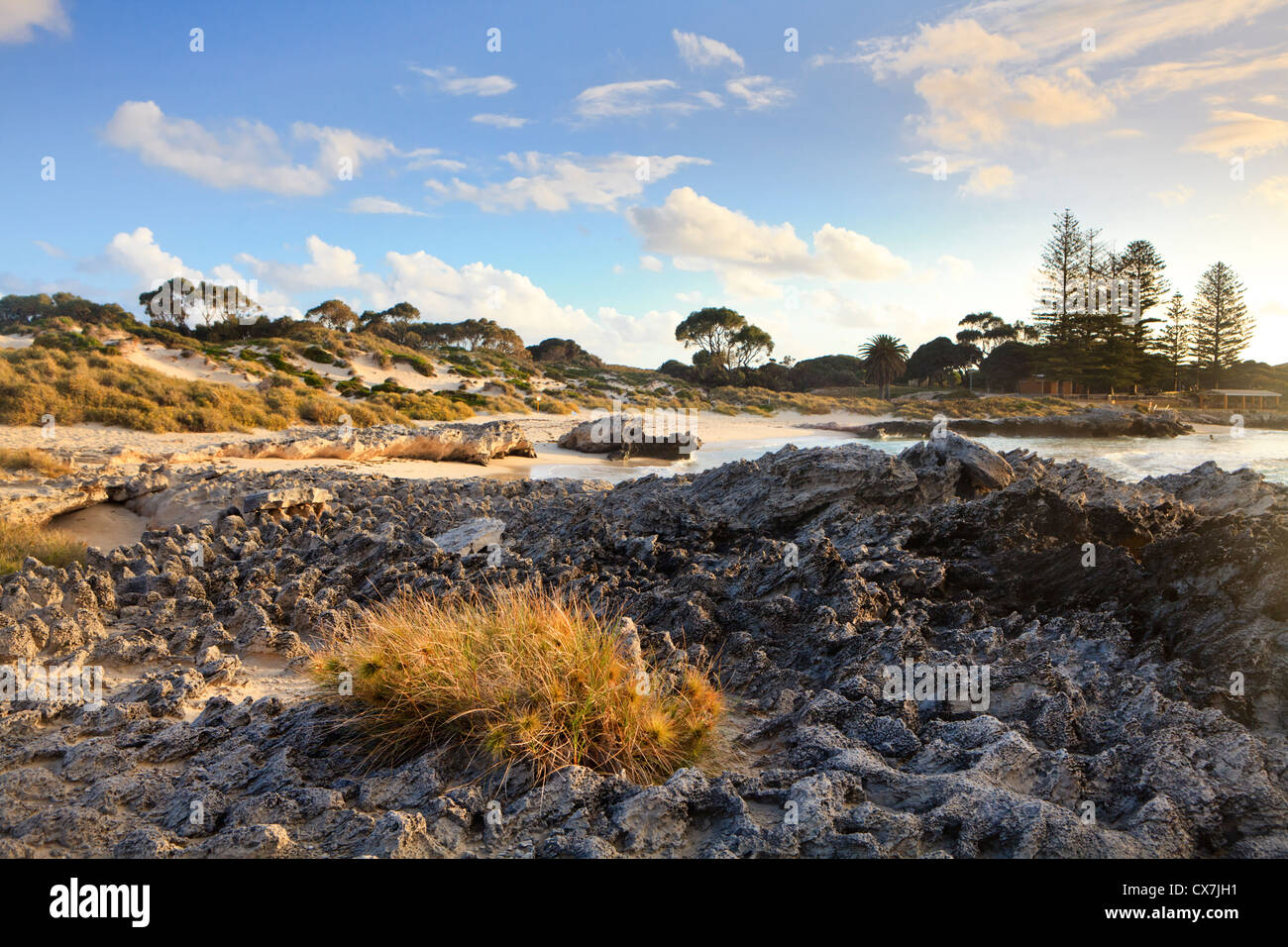 Beach spinifex growing on Tamala limestone on the shores of The Basin beach - Stock Image