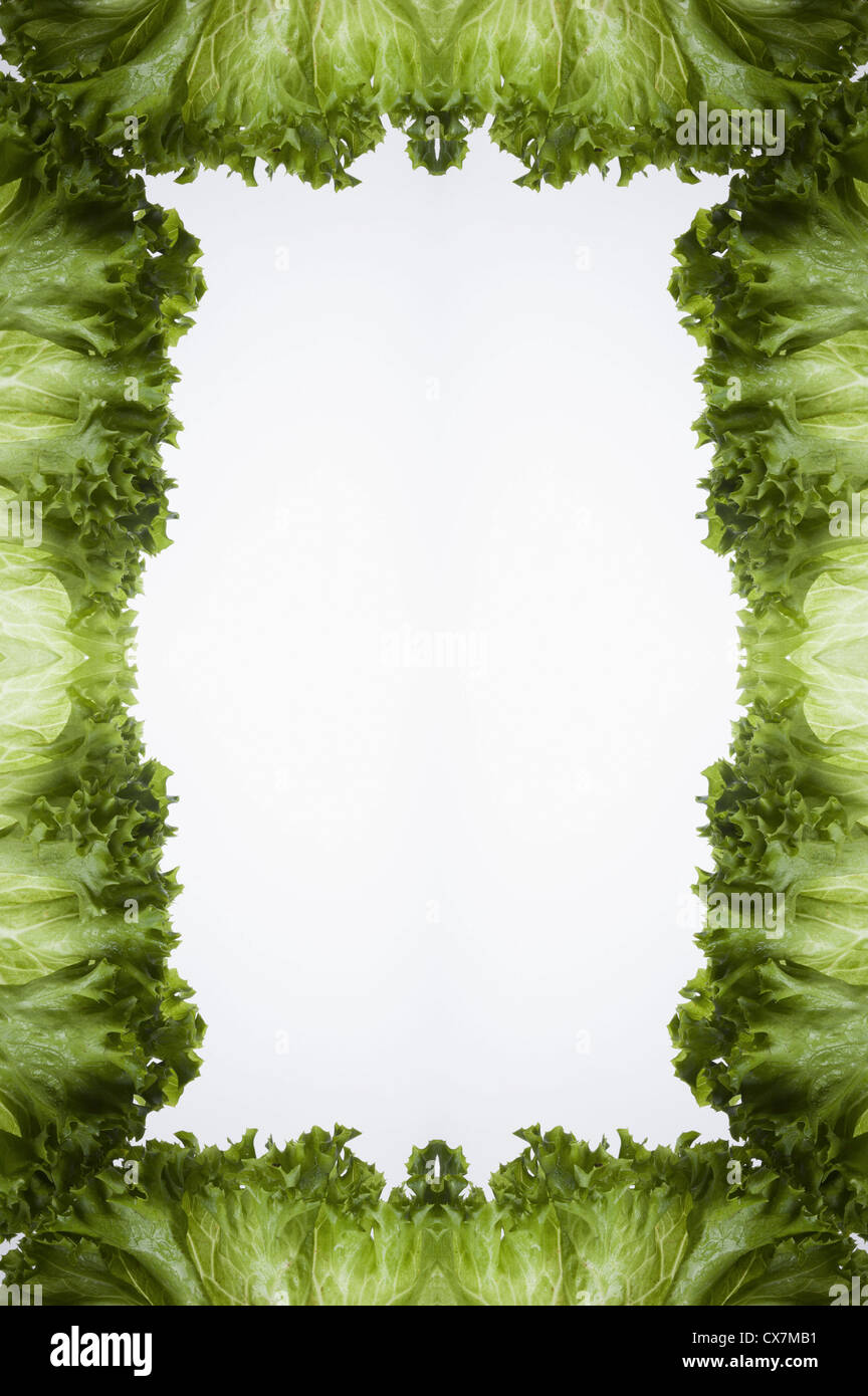 Leaves of green leaf lettuce arranged into a frame on a light box - Stock Image