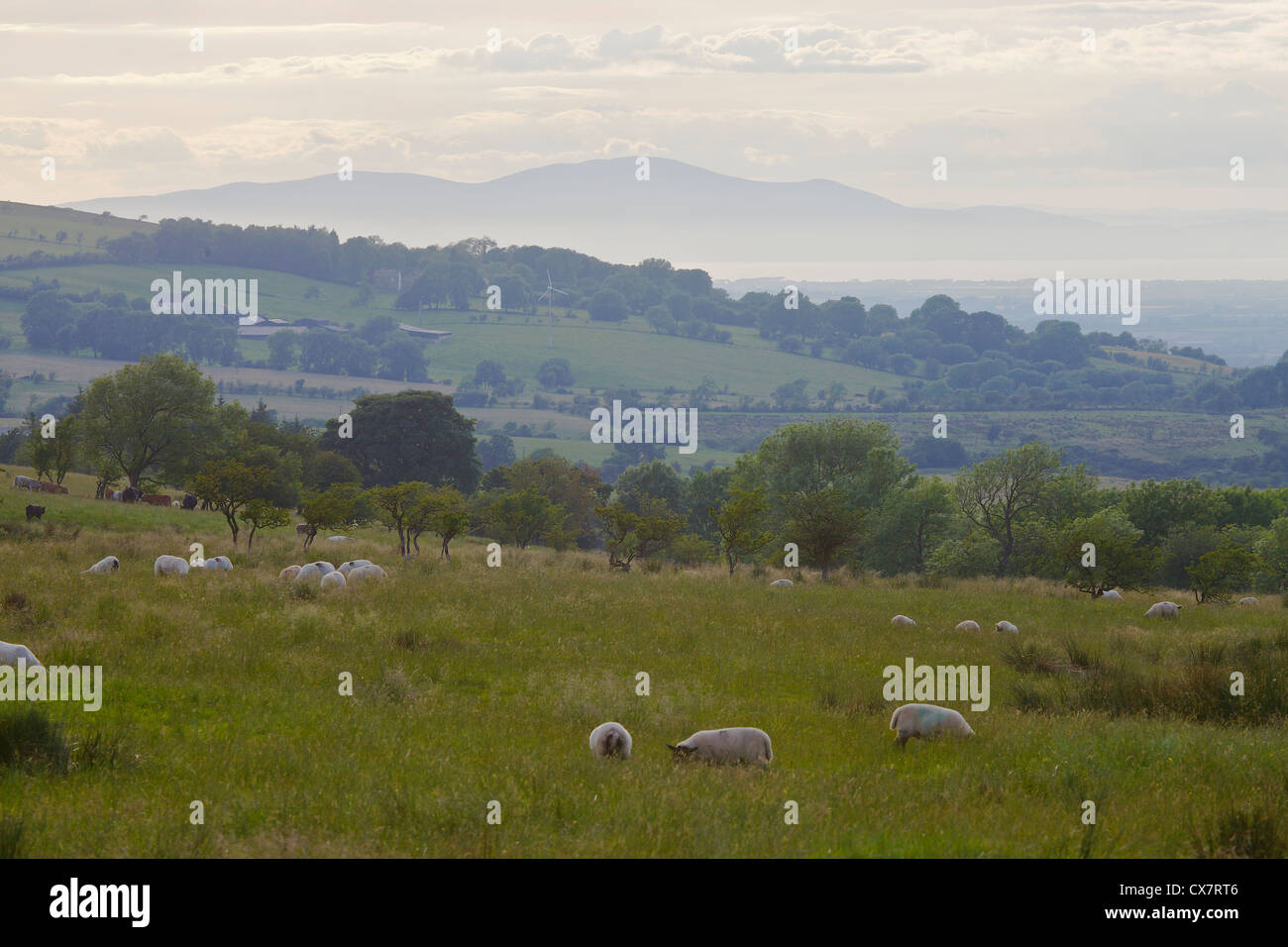 Calbeck television transmitter mast with Criffel from Warnell Fell in the Lake District, Cumbria, England UK - Stock Image