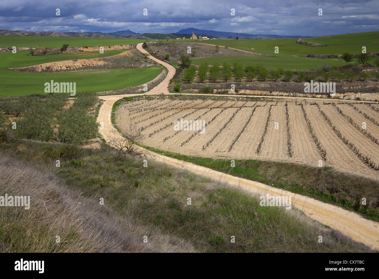 The Camino de Santiago trail crossing the Spanish countryside near Los Arcos. - Stock Image